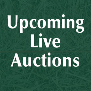 UpcomingLiveAuctions